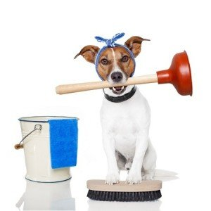 Emergency Plumbing Pembroke Pines Dog