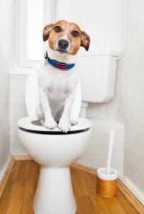 What\'s Wrong with My Toilet and Why Won\'t it Flush? - Tips to Fix