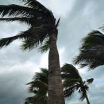 Storm Drain Cleanings for Florida Homes and Businesses